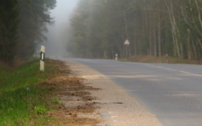 Picture road, forest, grass, fog, background