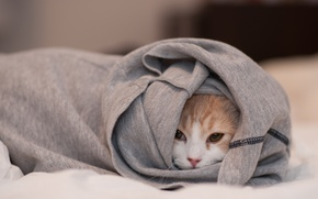 Picture cat, face, clothing, Ben Torode, Hannah, hid