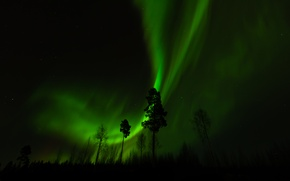 Picture forest, trees, night, Northern lights
