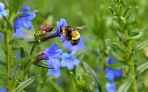 Picture flowers, spring, meadow, insect, bumblebee