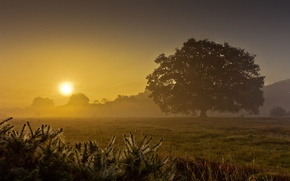 Picture field, summer, fog, tree, dawn, morning