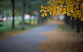 Picture autumn, leaves, macro, the city, glare, Park, tree, the evening, yellow, blur, Chicago, USA, Il