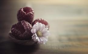 Wallpaper macro, Daisy, raspberry