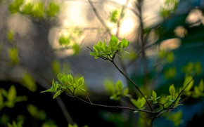 Picture leaves, bokeh, spring, branches