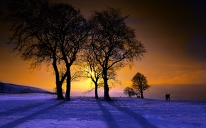 Picture trees, landscape, sunset