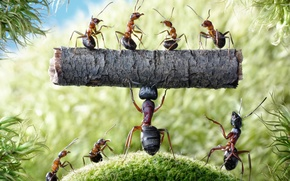 Picture summer, macro, insects, moss, the situation, ants, log, strongman, Wallpaper from lolita777