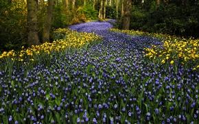 Picture flowers, Keukenhof, Netherlands, Park, hyacinths, trees, tulips