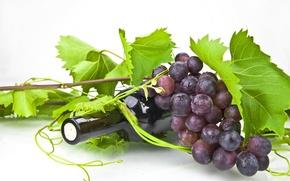 Wallpaper leaves, wine, bottle, grapes, tube, vine