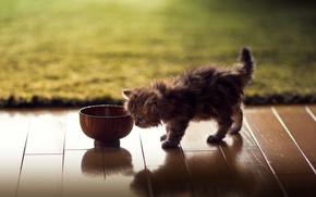 Picture cat, kitty, carpet, flooring, bowl, Daisy, Ben Torode