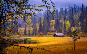 Picture autumn, forest, the colors of autumn, Finland, Finland, lake, shed