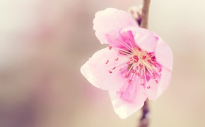 Picture mood, pink, tenderness
