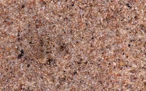 Picture sand, macro, nature, spider, disguise, camouflage, grit, nature, macro, sand, grains, Spider, camouflage