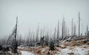 Picture winter, forest, landscape, fog