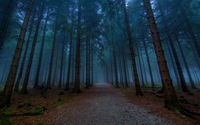 Picture forest, trees, nature, the way, tree, road, the evening, alley, path, paths, alley, beautiful road