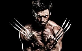 Picture Wolverine, Hugh Jackman, X-Men, Logan, Marvel, Movie, X Men