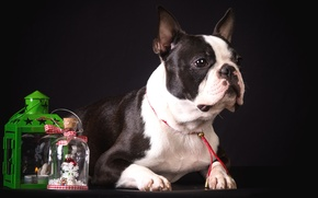 Picture spotted, decor, French bulldog