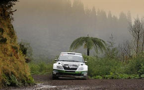 Picture Fog, Dirt, Rally, Rally, The front, Skoda, Fabia