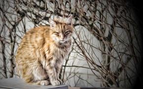 Picture cat, cat, background, Koshak