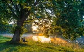 Picture the sun, light, bench, river, tree