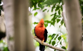 Picture bird, background, nature