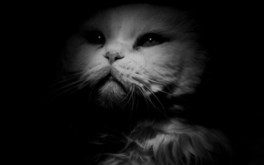 Picture white, cat, look, background