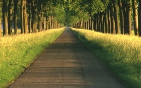 Picture road, nature, the way, the way, landscapes, road, alley, alley, wood Dale