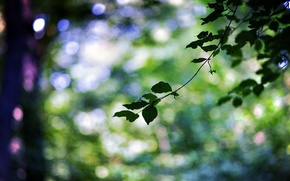 Picture leaves, macro, trees, green, sprig, background, tree, widescreen, Wallpaper, blur, branch, leaf, wallpaper, leaf, widescreen, …