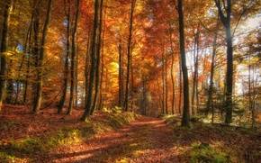 Wallpaper autumn, forest, nature