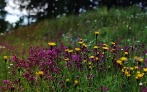 Picture nature, wildflowers, Finland