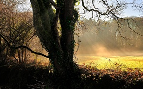 Wallpaper tree, light, the rays of the sun, grass, nature, landscape