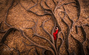 Wallpaper autumn, in red, girl, roots, foliage, tree