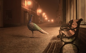 Picture lights, street, peacock