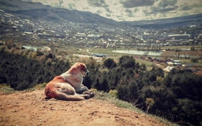 Picture landscape, view, dog