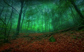Picture forest, nature, the darkness, foliage