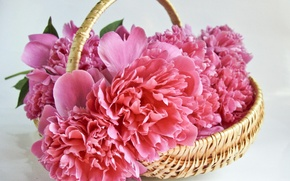 Picture flowers, basket, bouquet, peonies