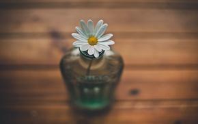 Picture flower, Daisy, vase