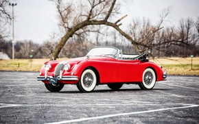 Picture coupe, Jaguar, Jaguar, classic, Coupe, 1961, Drophead, XK150