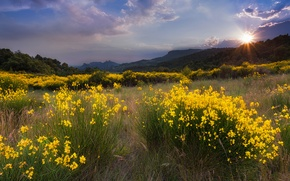Picture grass, the sun, clouds, trees, landscape, sunset, flowers, mountains, nature, glade, yellow
