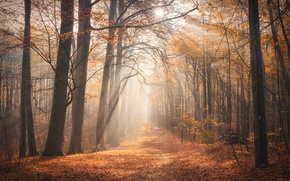 Wallpaper autumn, forest, fog, morning