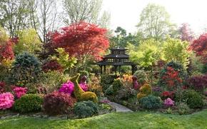 Wallpaper flowers, garden, lawn, trees, the bushes, gazebo, track, design