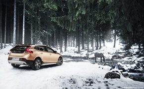 Picture forest, snow, stream, horse, Volvo, Volvo V40 Cross County