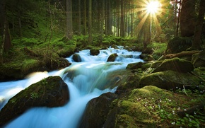 Picture forest, the sun, rays, trees, nature, river, stream, stones, moss, then