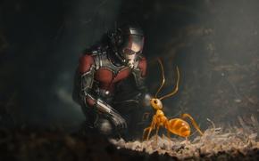 Picture ant, costume, helmet, superhero, comic, Marvel, Ant-man, Ant-man