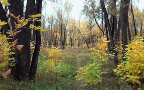 Picture forest, leaves, Autumn, Siberia
