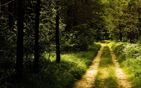 Wallpaper road, forest, trail