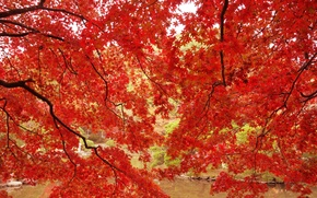 Picture autumn, leaves, trees, branches, pond, Park, maple, the crimson