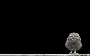 Picture background, chick, owlet