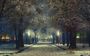 Picture trees, lights, alley, evening, street, spring