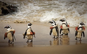 Picture humor, penguins, surf, lifebuoys