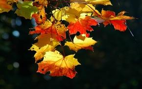 Wallpaper leaves, nature, leaf, sheets, autumn falling leaves
